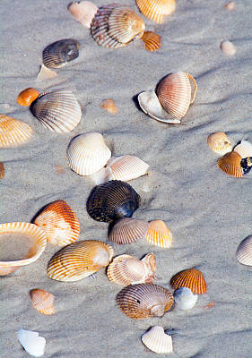 Photograph - Beach Shells by Kenneth Albin