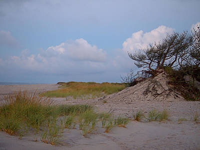 Photograph - Beach Shrub I I by  Newwwman
