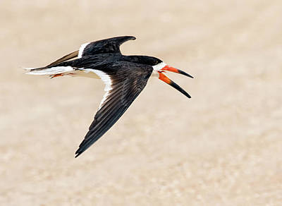Photograph - Beach Skimming by Art Cole