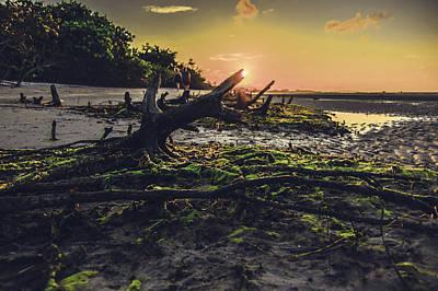Beach Stumps Art Print