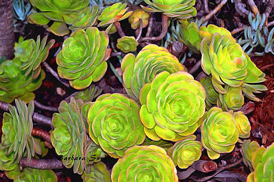 Photograph - Beach Succulents  by Barbara Snyder
