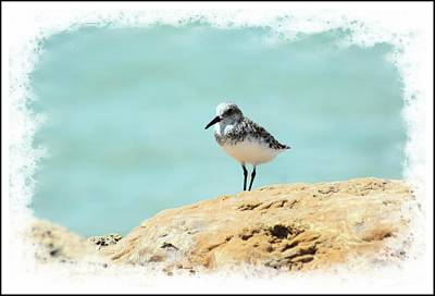 Photograph - Beach Sunning by Sheri McLeroy