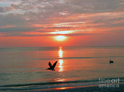 Photograph - Beach Sunset Byrds 2 by Digartz - Thom Williams