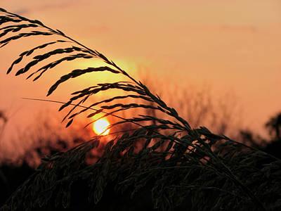 Photograph - Beach Sunset by Carolyn Marshall