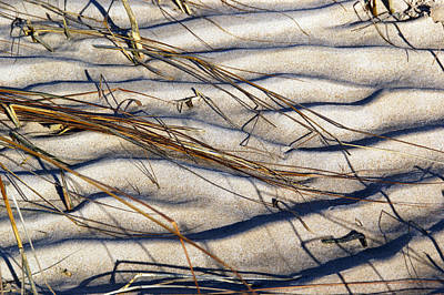 Photograph - Beach Tapestry by Lynda Lehmann