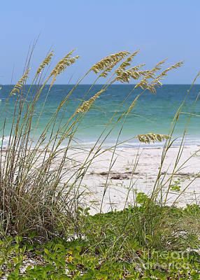 Photograph - Beach Through Sea Oats by Carol Groenen