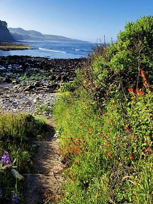 Photograph - Beach Trail by Kathleen Bishop