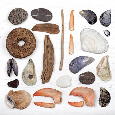 Photograph - Beach Treasure Flat Lay by Jane Rix