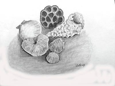 Drawing - Beach Treasures by Christine Lathrop