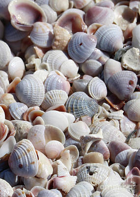 Photograph - Beach Treasures - Seashells by Carol Groenen