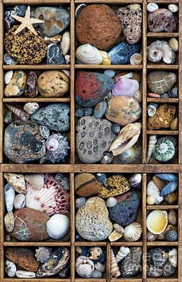 Beach Treasures Art Print by Tim Gainey