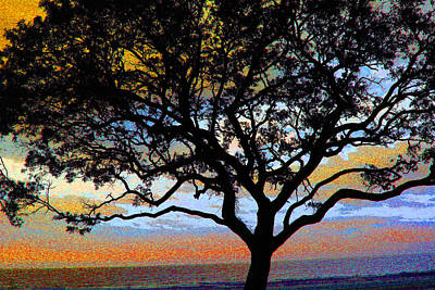 Photograph - Beach  Tree -  No. 1 - Ver 1 by William Meemken