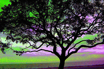 Photograph - Beach  Tree - No. 1 - Ver. 2 by William Meemken