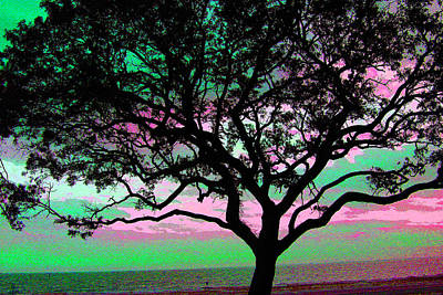 Photograph - Beach  Tree - No. 1 - Ver. 3 by William Meemken