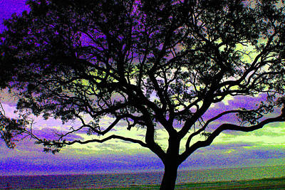 Photograph - Beach  Tree - No. 1 - Ver. 4 by William Meemken