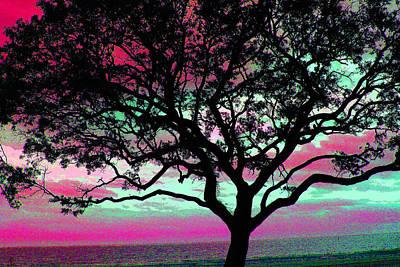 Photograph - Beach  Tree -  No. 1 - Ver. 5 by William Meemken