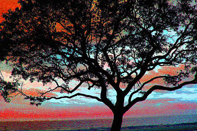 Photograph - Beach  Tree -  No. 1 -  Ver. 6 by William Meemken