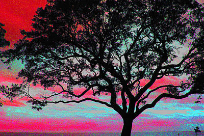 Photograph - Beach  Tree -  No. 2 by William Meemken