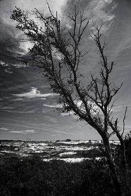 Photograph - Beach Tree by George Taylor
