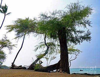 Photograph - Beach Tree by Mary Haber