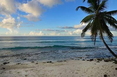 Landscape Photograph - Beach Tree by Michael Scott