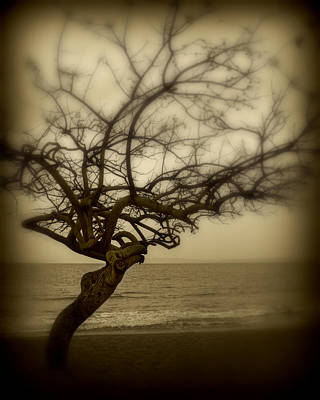 Beach Tree Art Print by Perry Webster