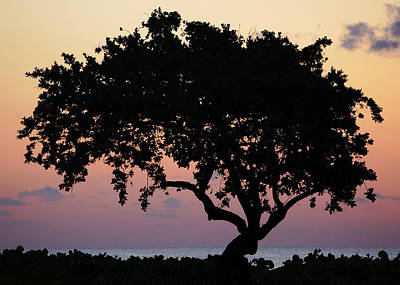 Photograph - Beach Tree Silhouette Delray Beach Florida by Lawrence S Richardson Jr