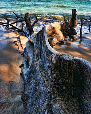 Photograph - Beach Wood by John Bushnell