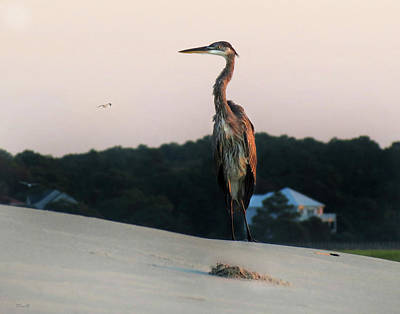 Photograph - Beachcomber by Deborah Smith