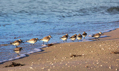 Photograph - Beachcombers 2 - Sandpipers On The Beach by HH Photography of Florida