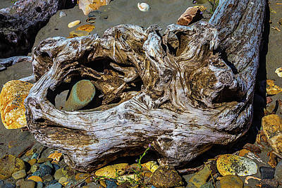 Beached Driftwood Art Print