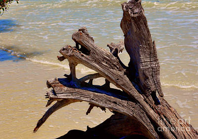 Photograph - Beached by Frank Williams