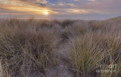 Beachgrass And Sunset Print by Masako Metz