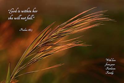Photograph - Beachgrass Fairlawn by Mary Jo Allen