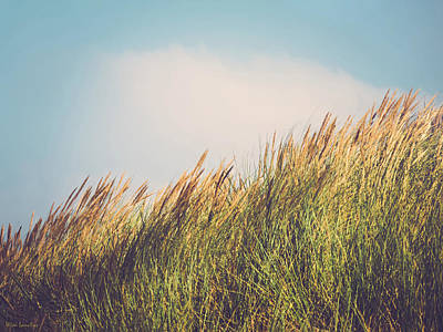 Photograph - Beachgrass by Wim Lanclus
