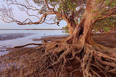 Photograph - Beachmere, Queensland, Australia by Robert Charity