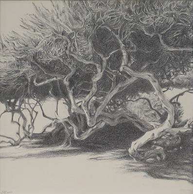 Drawing - Beachside Trees by Jackie Hoats Shields