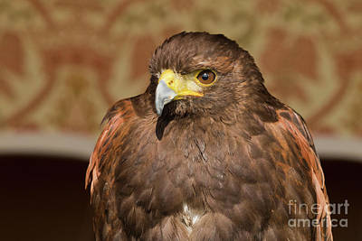 Photograph - Beady Eyes Bird Of Prey by Terri Waters