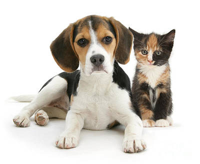 Photograph - Beagle And Calico Cat by Mark Taylor
