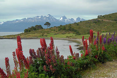 Photograph - Beagle Channel And Tierra Del Fuego by Alan Toepfer