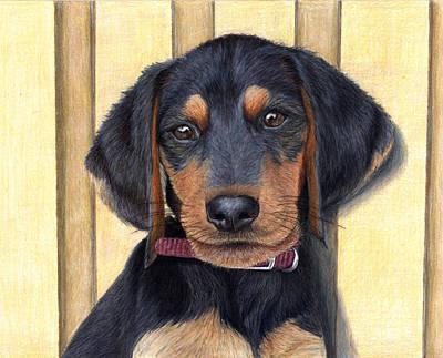 Dachshund Puppy Drawing - Beagle/dachshund Puppy by Corrina Thurston