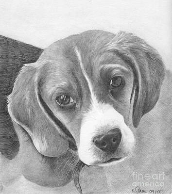 Drawing - Beagle by Karen Townsend