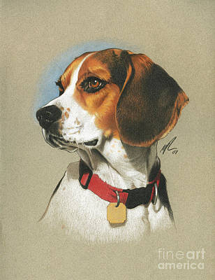 Pencil Painting - Beagle by Marshall Robinson