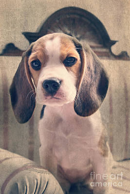 Puppy Mixed Media - Beagle Puppy Luna by Angela Doelling AD DESIGN Photo and PhotoArt