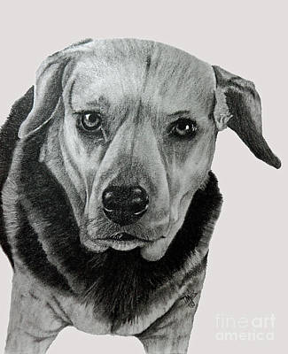 Drawing - Beagle-shepherd Mix by Terri Mills