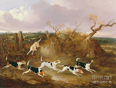 Beagles In Full Cry Art Print by John Dalby