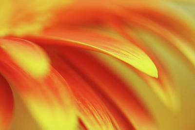 Beaming  Art Print by Connie Handscomb