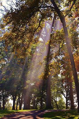 Photograph - Beams Of Sunshine by Bruce Bley