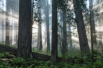 Photograph - Beams Through The Forest by Greg Nyquist