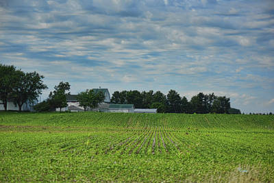 Photograph - Beans And White Barns by Paulette B Wright
